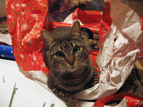 christmas spirit gifts to di y for - How To Wrap A Cat For Christmas