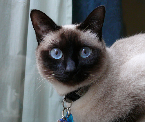 i've lost my cat