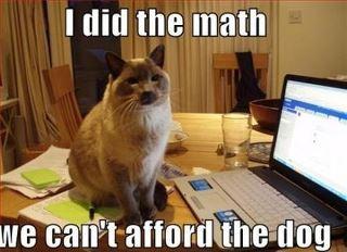 Ap5A9daCAAAg6Bb tax time catfoodbreath furry feline fabulous