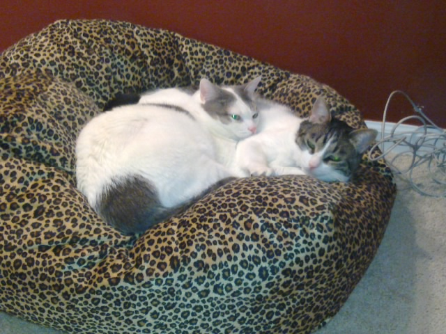 sissy and bear in the cuddle cube.jpg