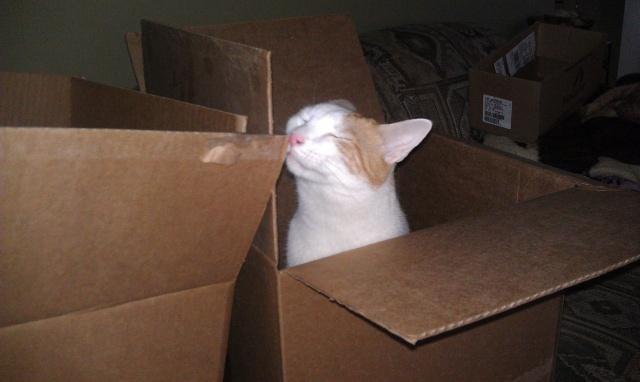 Hemi Cat