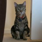 Kitty Roland